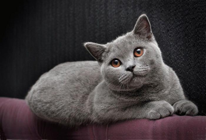 Кот сидит на диване