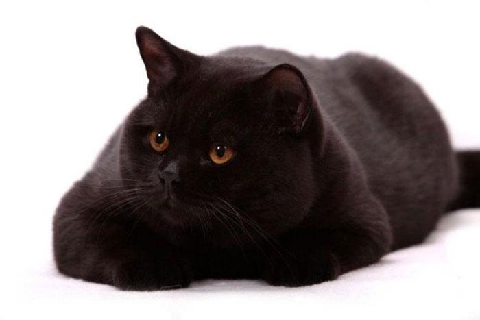 Черный окрас