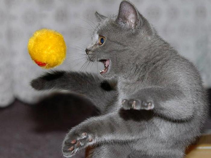 Котенок с мячиком