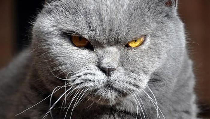 Кот обиделся