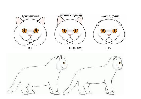 Различие между породами